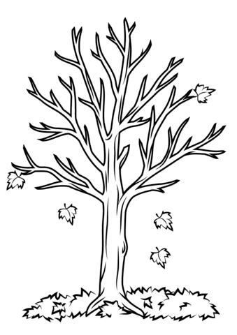 fall tree coloring page free printable coloring pages