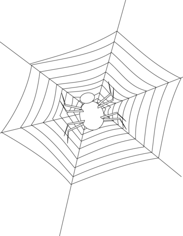 spider making its web coloring page free printable coloring pages