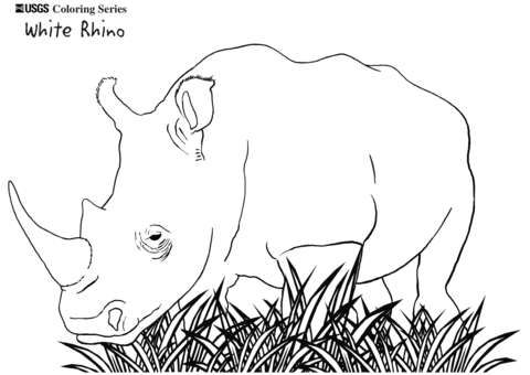 White Rhino Coloring Page Free Printable Coloring Pages