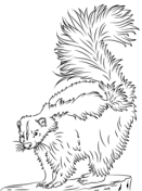 striped skunk coloring page free printable coloring pages