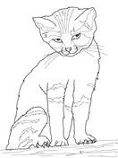 coloriage chaton des sables coloriages à imprimer gratuits