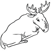 moose coloring pages free coloring pages