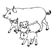 coloring pages of pigs # 22