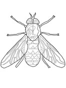 house fly coloring page free printable coloring pages