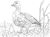 gooses coloring pages supercoloring com