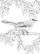 mockingbird and bluebonnet texas state bird and flower coloring