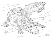 alligators coloring pages free coloring pages