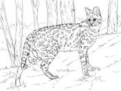 wild cats coloring pages free coloring pages