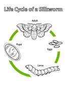 biology coloring pages free coloring pages
