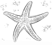 starfish coloring pages free coloring pages