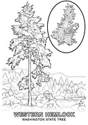 george washington and the cherry tree coloring page free