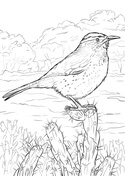 carolina wren coloring page coloring pages