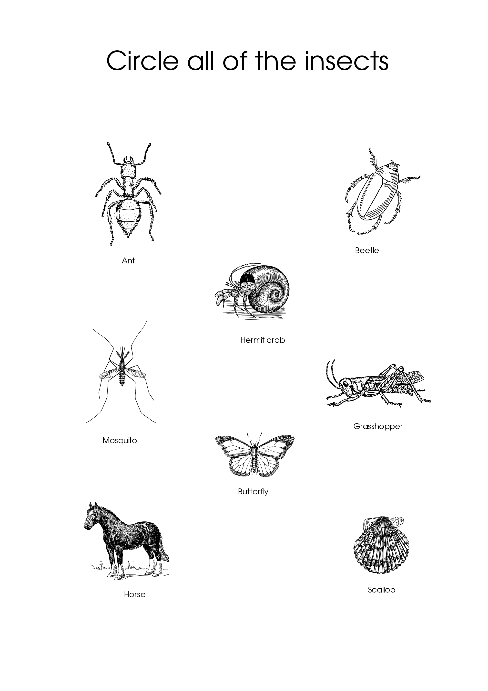 Circle All Of The Insects Worksheet