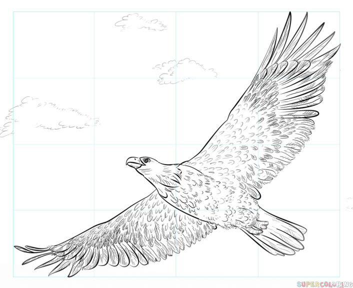 how to draw a bald eagle step by step drawing tutorials