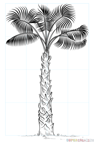 how to draw cabbage palm tree  stepstep drawing tutorials