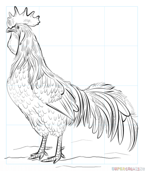 how to draw a rooster  stepstep drawing tutorials