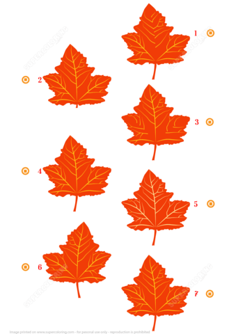 Find Two Similar Pictures Of Maple Leaves Free Printable