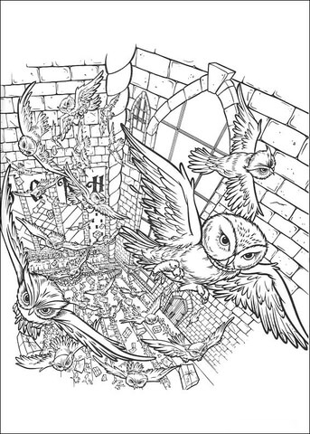 hard owl page colouring pages