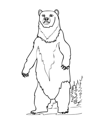 brown bear standing up coloring page super coloring