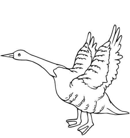 pics photos flying snow goose coloring page super