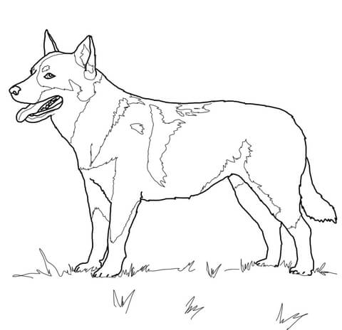 free coloring pages dog breeds cooloring com