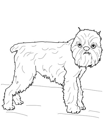 Brussels Griffon Coloring Page Super Coloring