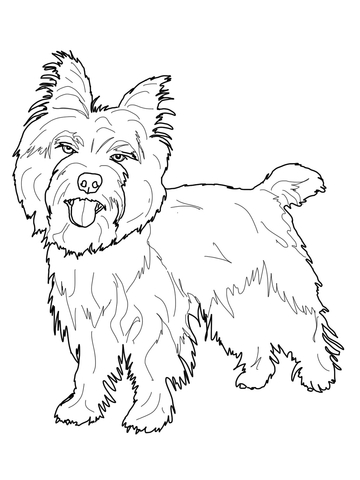 Cairn Terrier Coloring Page