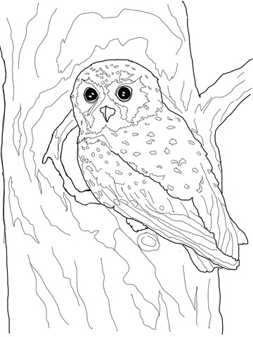 elf owl coloring page supercoloring com