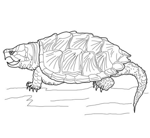 Alligator Snapping Turtle Coloring Page Supercoloring Com