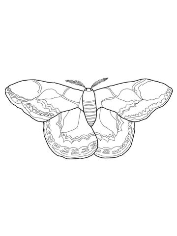 rothschilds silk moth coloring page supercoloring com