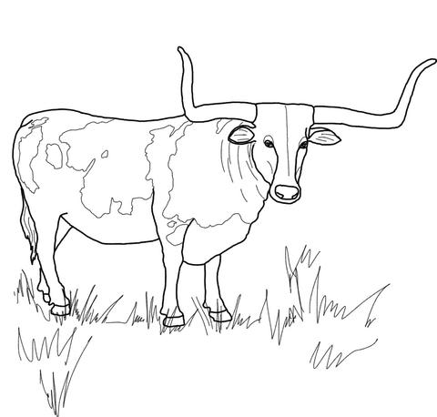 longhorn steer supercoloring com