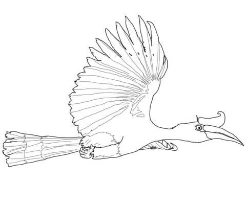 Flying Rhinoceros Hornbill Coloring Page