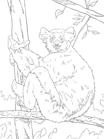 Indri Coloring Page