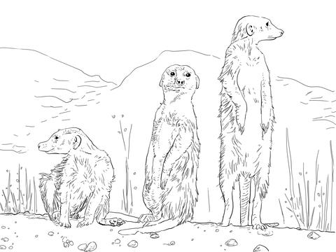 Three Meerkats Coloring Page