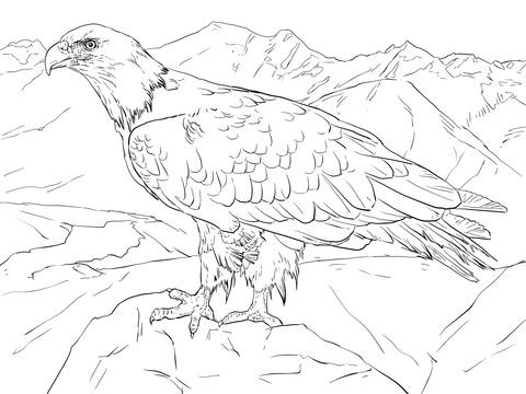 bald eagle from alaska coloring page supercoloring com