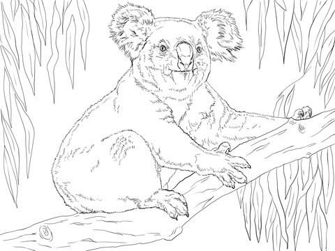 koala sits on a branch coloring page supercoloring com