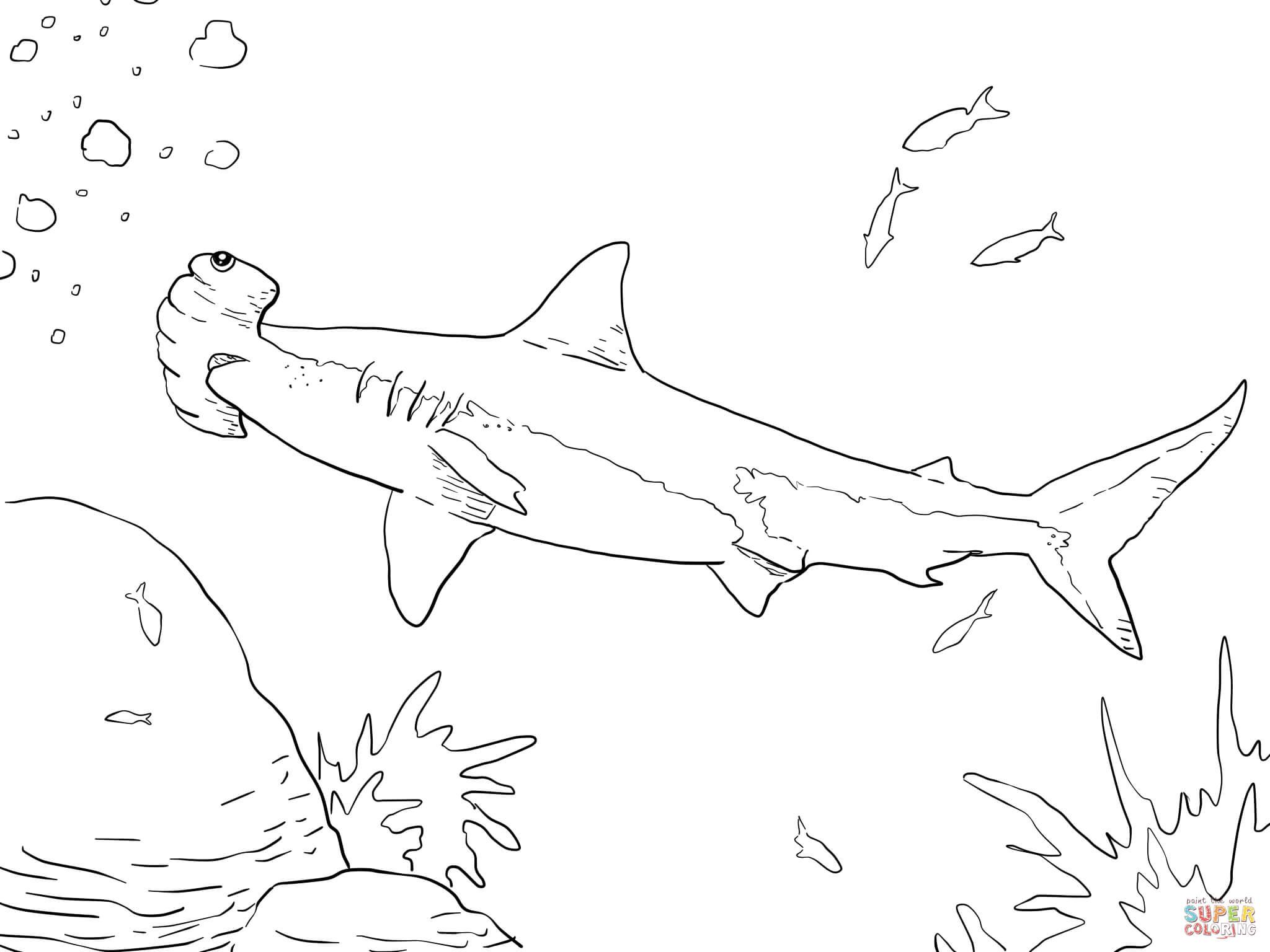 great hammerhead shark coloring online