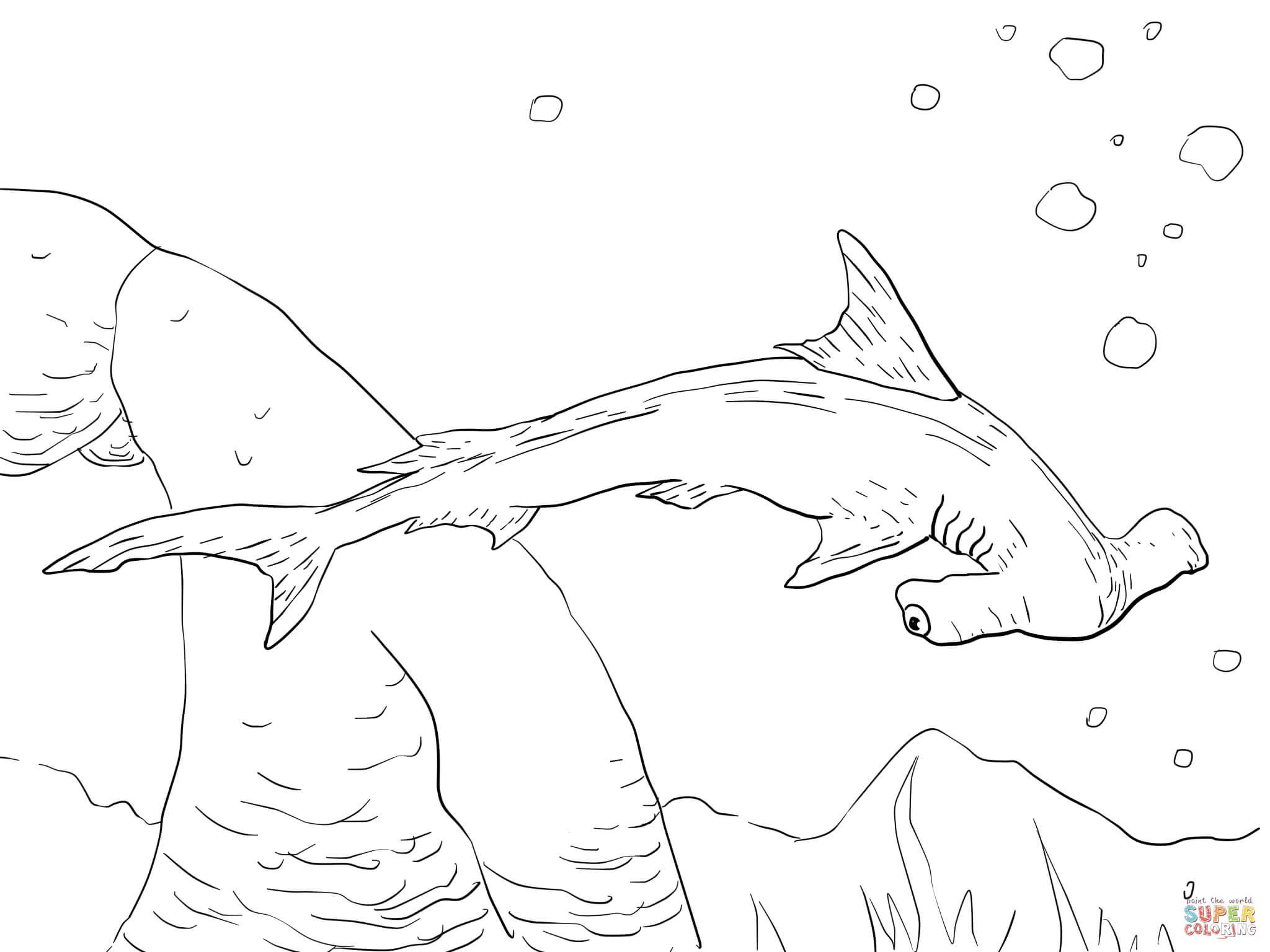 scalloped hammerhead shark coloring online