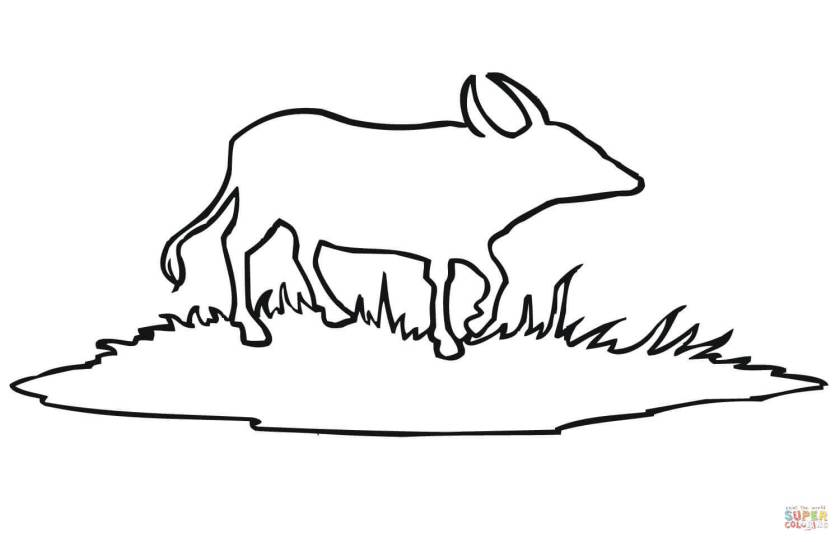 bison colouring pages sketch coloring page