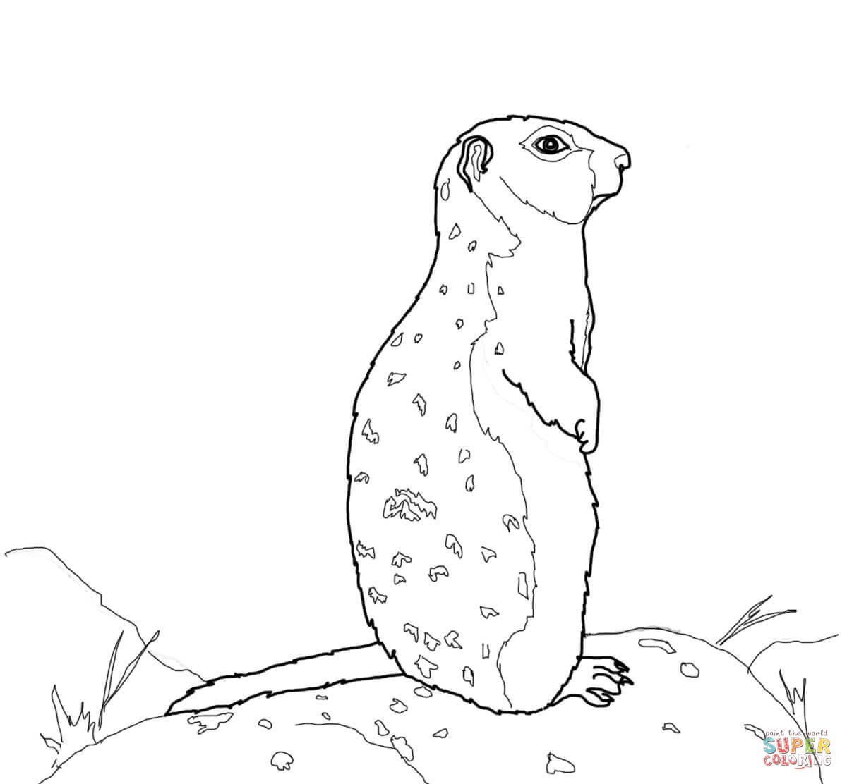 arctic ground squirrel stands on a rock coloring online