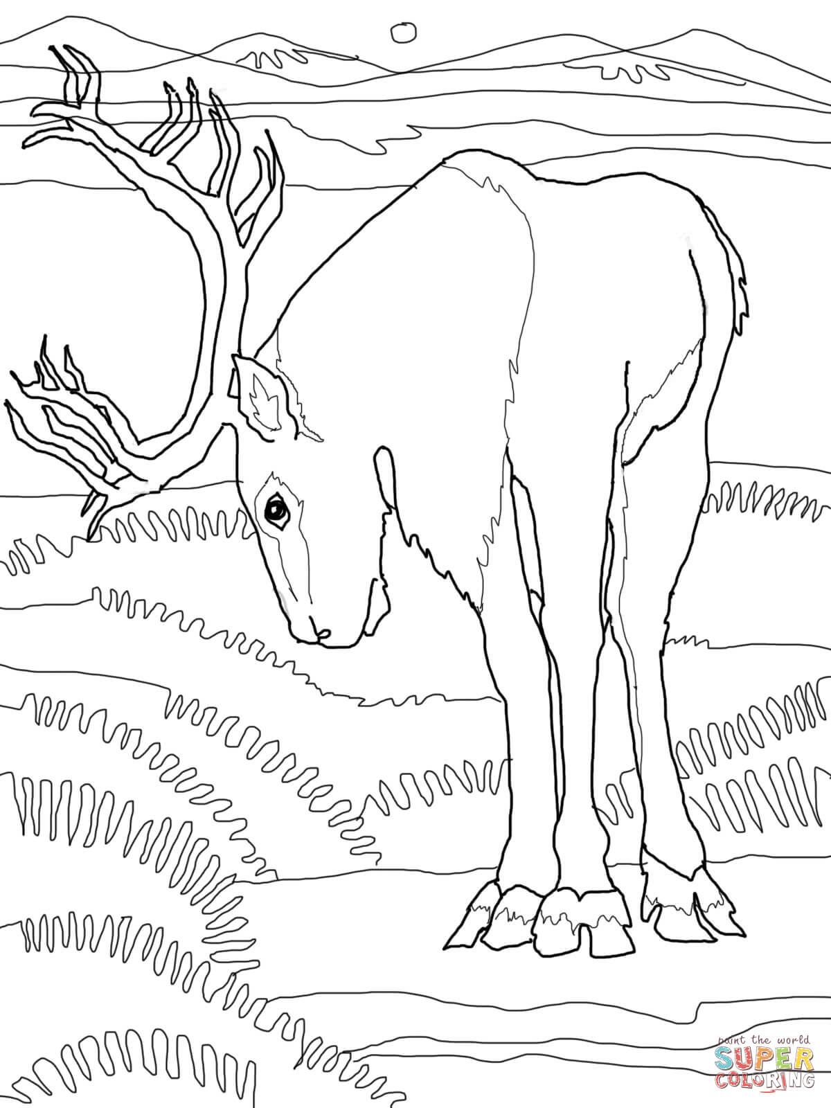 caribou deer coloring online super coloring