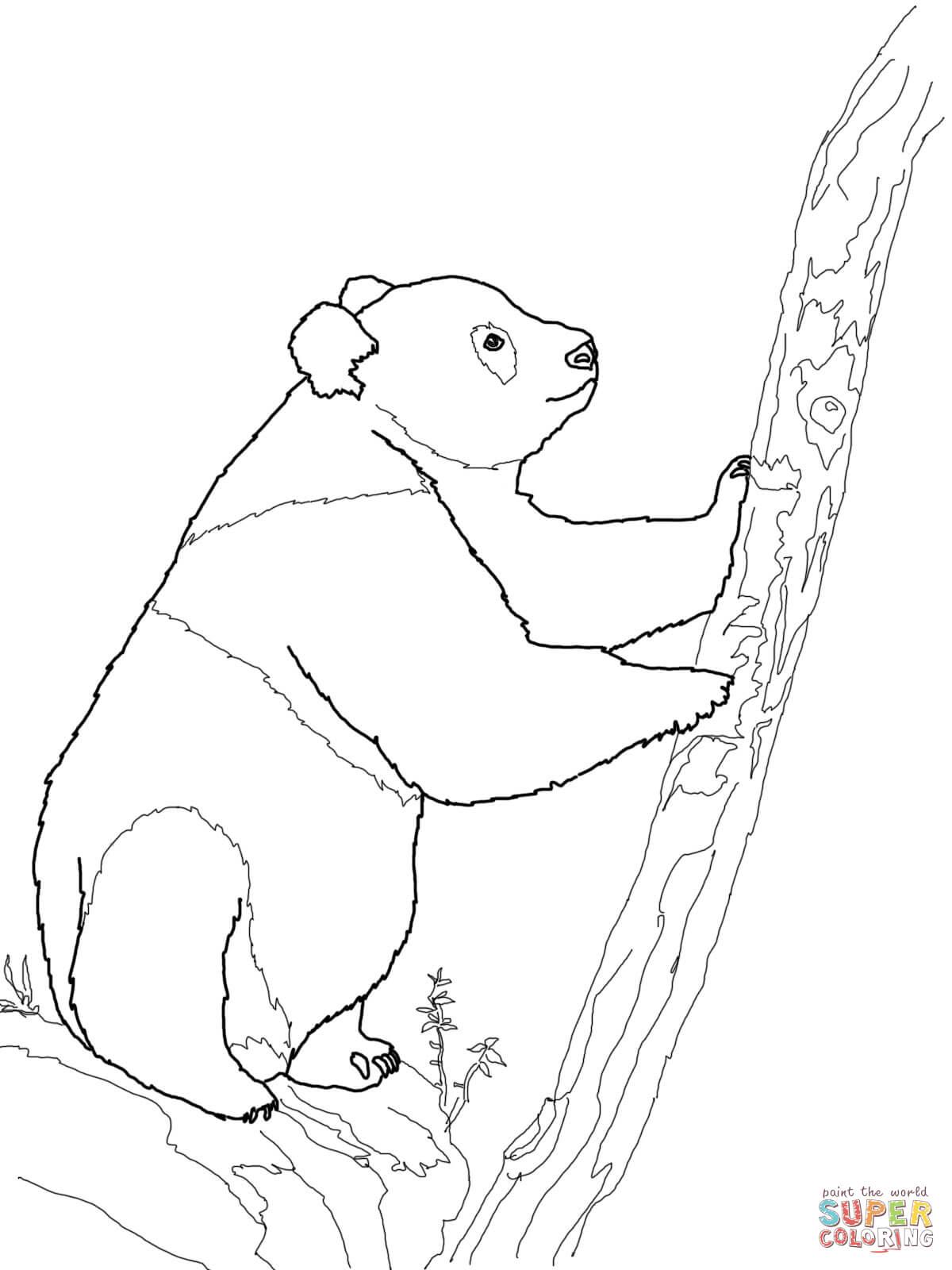 giant panda bear coloring pages coloring pages panda bear