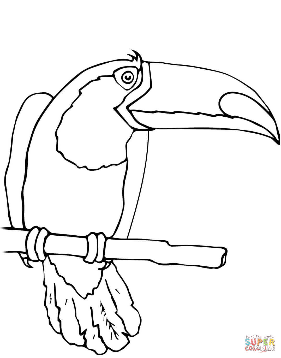 bird in addition pencil drawing parrot further parrot tropical bird