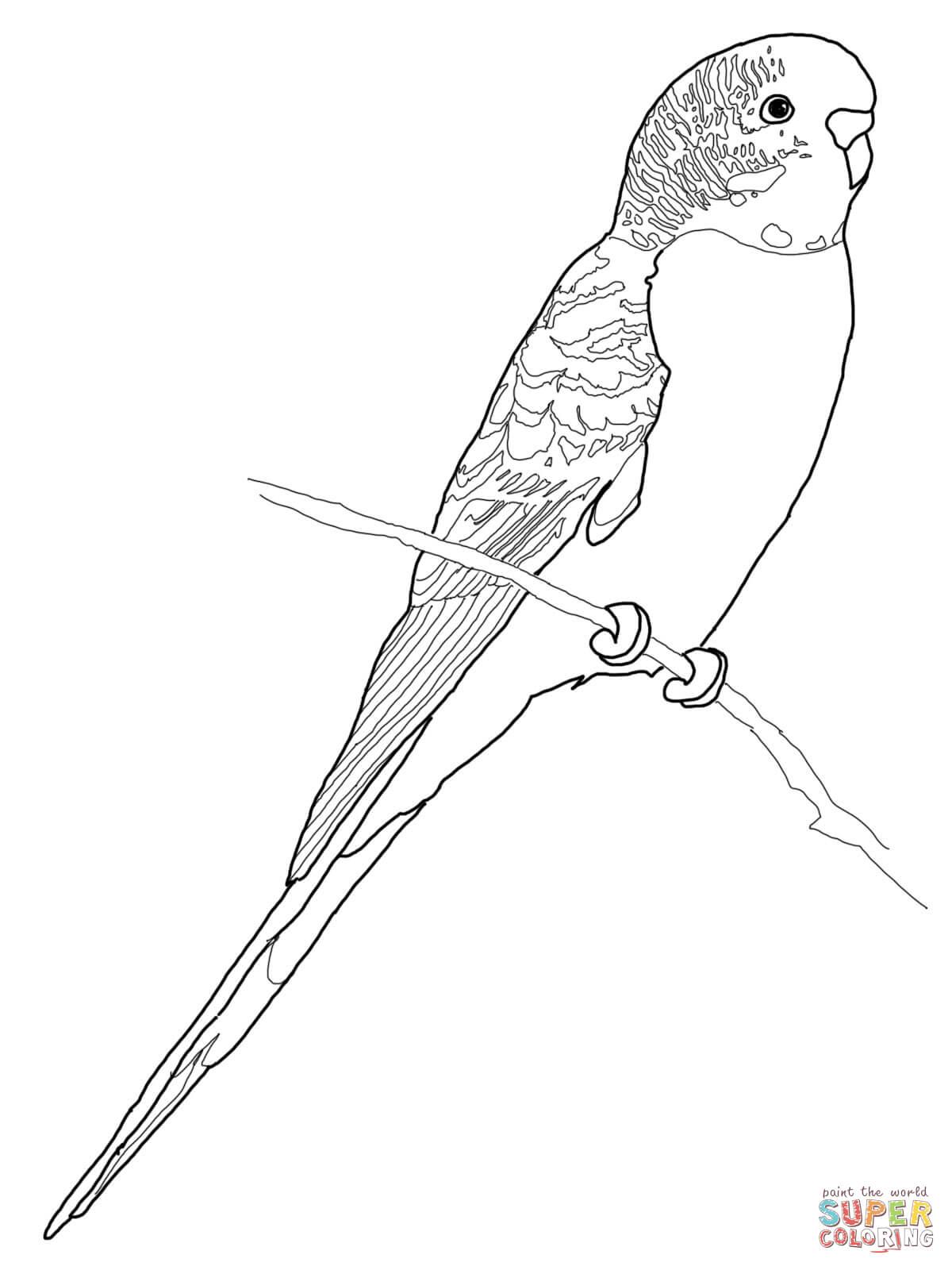 budgerigar parrot coloring online
