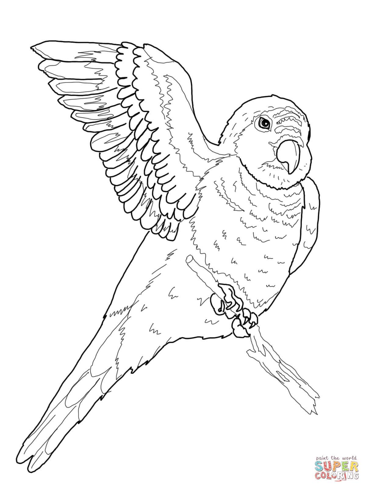 quaker parrot coloring online super coloring