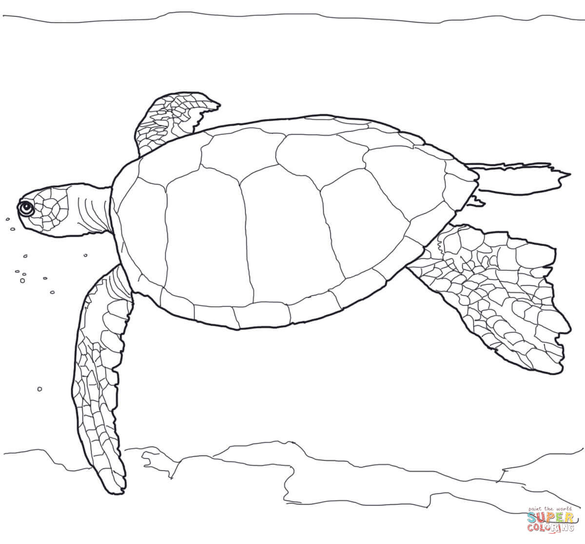 Hawaiian Sea Turtle Drawing