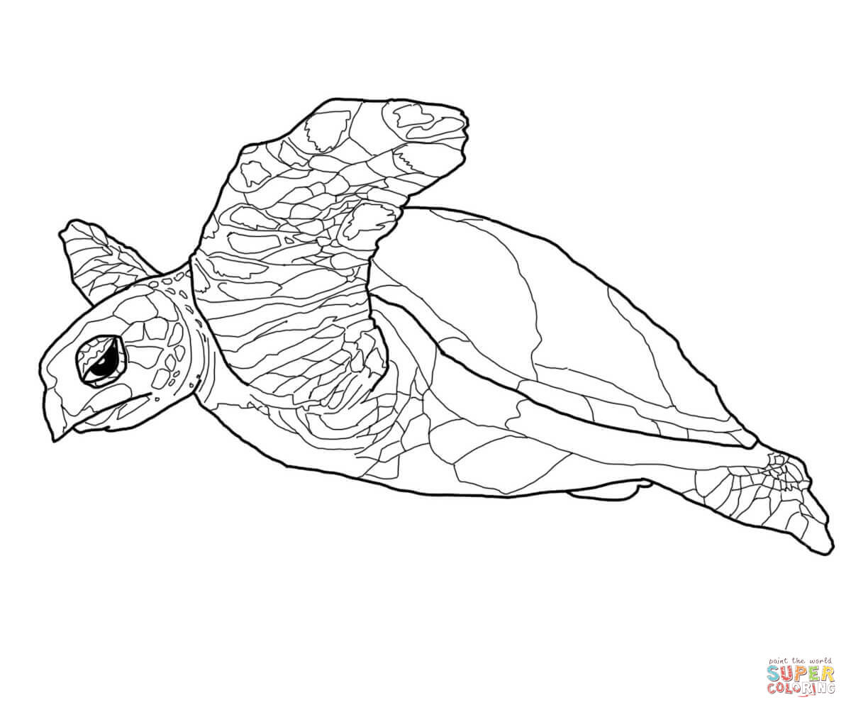 file name hawksbill turtle coloring page jpg resolution 1200x1200
