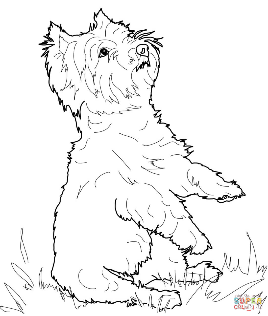 Jack Russell Terrier Coloring Pages Coloring Pages