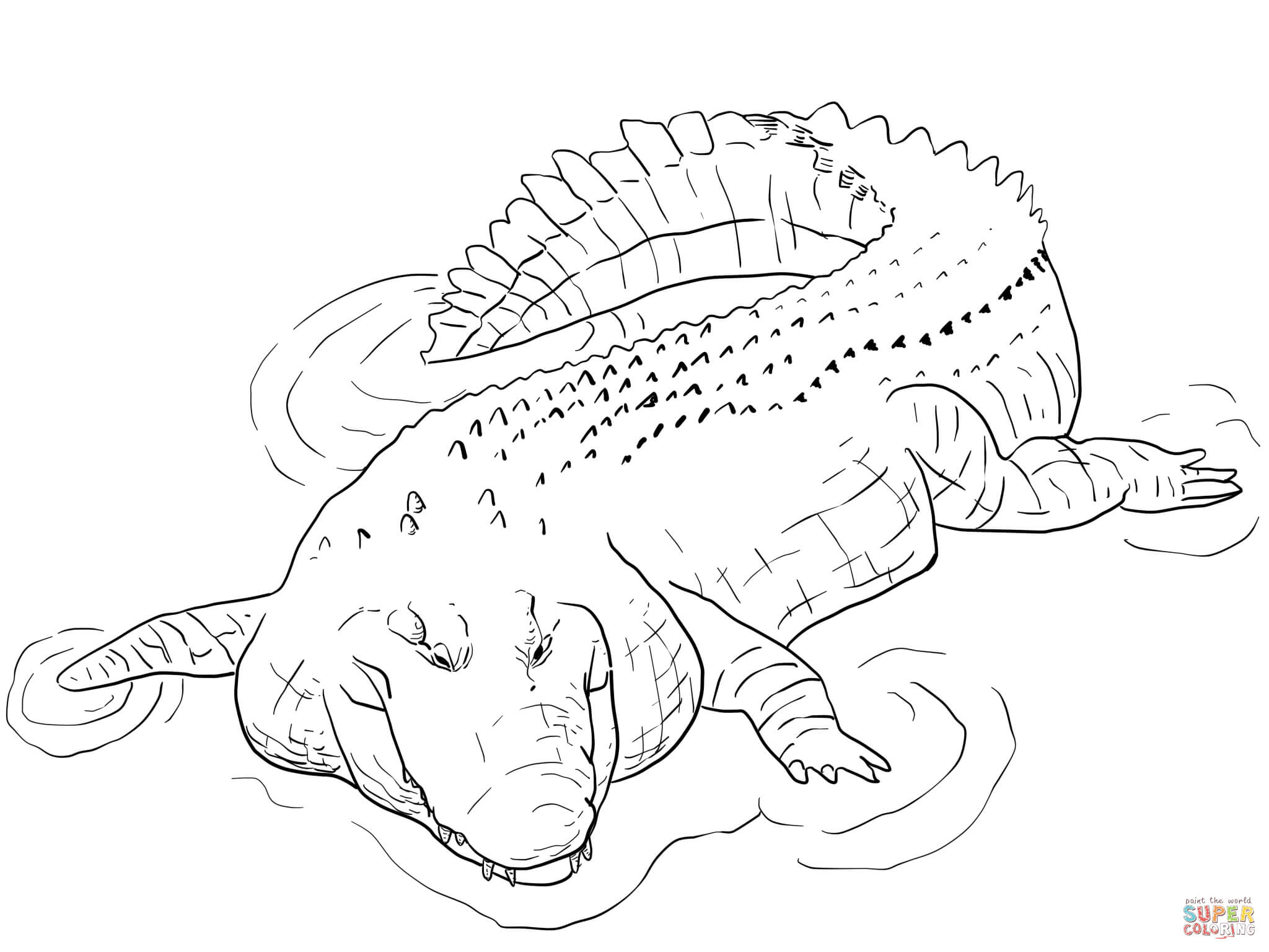 indo pacific saltwater crocodile coloring online