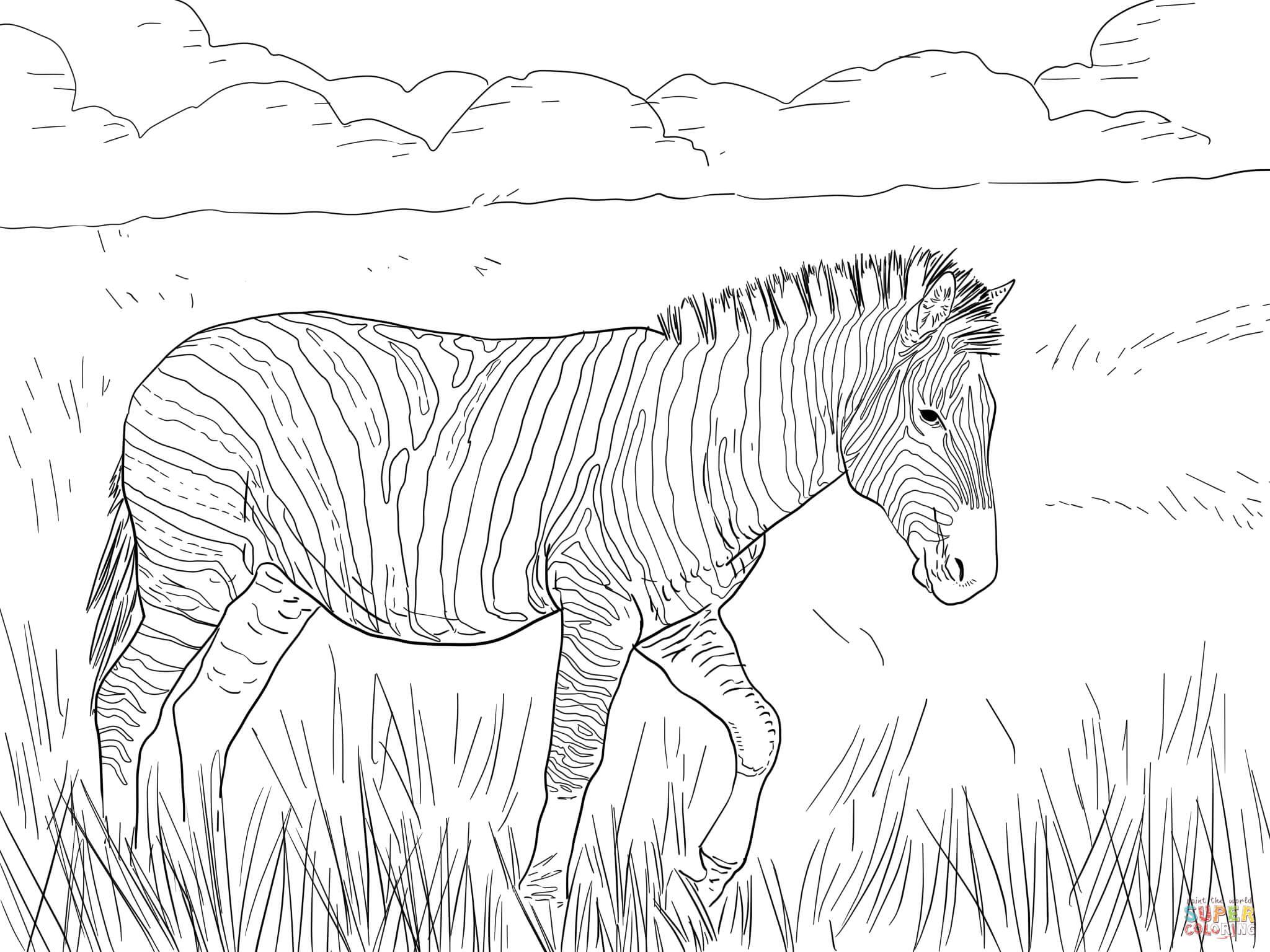 zebra coloring pages online cooloring com